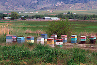 Beehives on Field, South Okanagan Valley, BC, British Columbia, Canada - Beekeeping