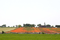 Un campo di papaveri in Puglia.<br /> Landscape with poppies in Puglia.<br /> UPDATE IMAGES PRESS/Riccardo De Luca