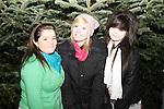 Christmas Lights 2010