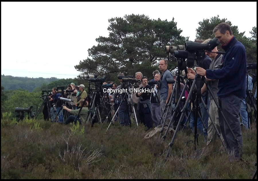 BNPS.co.uk (01202 558833)<br /> Pic: NickHull/BNPS<br /> <br /> ****Please use full byline****<br /> <br /> The bird watchers.<br /> <br /> Hundreds of bird watchers have flocked to a nature reserve in Dorset after a rare short-toed eagle arrived there on Saturday.<br /> <br /> About 700 people travelled to Morden Bog, near Wareham, over the weekend.<br /> <br /> It is thought to be first sighting of the species on the British mainland.<br /> <br /> The birds are common in central and southern Europe and have a wingspan of up to 6ft.<br /> <br /> Short-toed eagles migrate from Africa in the spring and can live up to 30 years.
