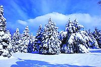 SING WOODS SNOWSCAPE SAN GORGONIO MOUNTAIN