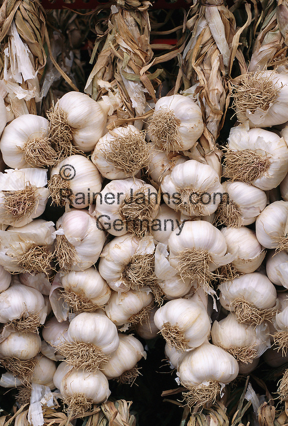 France, Provence: Garlic | Frankreich, Provence: Knoblauch