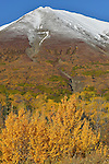 Intense fall colours on Haines Hwy, Yukon.