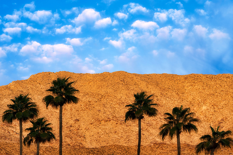Palm trees and sunrise clouds and San Jacinto Mountains.. Palm Springs, California