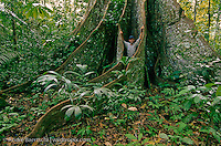 "Wildlife Photographer André Baertschi at the buttressed base of an emergent ""Huangana Caspi"" tree (Sloanea obtusifolia) in lowland tropical rainforest, Manu National Park, Madre de Dios, Peru."