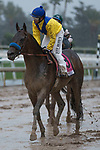 ARCADIA, CA  MARCH 10: A very muddy #8 Mubtaahij, ridden by Mike Smith,, after the Santa Anita Handicap (Grade l) on March 10, 2018, at Santa Anita Park in Arcadia, CA. (Photo by Casey Phillips/ Eclipse Sportswire/ Getty Images)