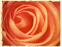 Close-up of a Red Rose - Polaroid Transfer