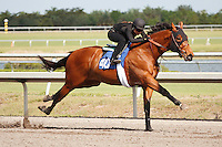 #40.Fasig-Tipton Florida Sale,Under Tack Show. Palm Meadows Florida 03-23-2012 Arron Haggart/Eclipse Sportswire.