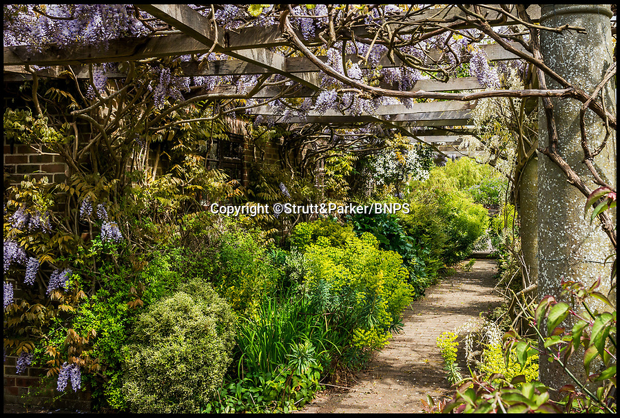 BNPS.co.uk (01202 558833)<br /> Pic: Strutt&Parker/BNPS<br /> <br /> Wisteria covered pergola in the grounds<br /> <br /> Hello Sailor? - The perfect seaside residence for a lover of the sea.<br /> <br /> A luxury harbourside home with its own private dock in the back garden has launched on to the market - but you'll need a pirates treasure to afford it.<br /> <br /> £3.4million Wharf House is located in one of the country's best sailing communities in Emsworth, Hants, and is surrounded by water.<br /> <br /> From the front it has spectacular views over Chichester Harbour and at the back there is a mooring space for a large boat.