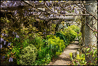 BNPS.co.uk (01202 558833)<br /> Pic: Strutt&amp;Parker/BNPS<br /> <br /> Wisteria covered pergola in the grounds<br /> <br /> Hello Sailor? - The perfect seaside residence for a lover of the sea.<br /> <br /> A luxury harbourside home with its own private dock in the back garden has launched on to the market - but you'll need a pirates treasure to afford it.<br /> <br /> &pound;3.4million Wharf House is located in one of the country's best sailing communities in Emsworth, Hants, and is surrounded by water.<br /> <br /> From the front it has spectacular views over Chichester Harbour and at the back there is a mooring space for a large boat.
