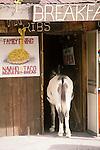 Jackass awaiting a table at a restaurant in Oakman, Ariz.