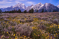 Grand Teton National Park Photos