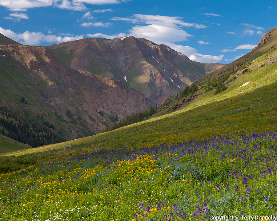 San Juan Mountains, CO<br /> San Juan range from alpine meadow of American Basin