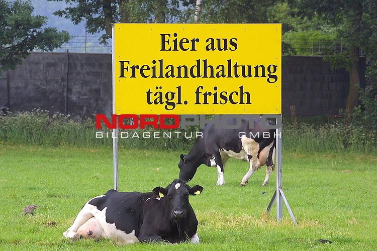 glueckliche Kuehe auf der gruenen saftigen Wiese im Fruehling nach der ueberstandenen MKS und BSE Seuche in Niedersachsen<br /> <br /> [Foto ł nordphoto -  Foto ist honorarpflichtig!  7 % MwSt. Belegexemplar erforderlich - (Dig.Fotografie)<br /> Georg-Reinke-Strasse 1; 49377 Vechta