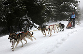 2nd February 2019, Thuringia, Frauenwald, Germany; Sled dog handler Holger Brotzmann and his team are on their way during a sled dog race. 120 mushers from five nations with their huskies, samoyeds, malamutes or Greenland dogs started.