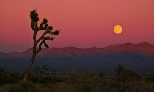 A FULL MOON RISES OVER THE MOJAVE DESERT NEAR BAKER, CALIFORNIA