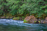 ORCAN_D221 - USA, Oregon, Mount Hood National Forest,  Lush spring forest borders the Clackamas River - a federally designated Wild and Scenic River.