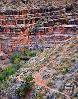 Page Spring, a permanent water source on the Horseshoe Mesa East Spur Trail below the rim of Horseshoe Mesa, Grand Canyon National Park.