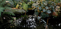 Tropical Rainforest Glasshouse (formerly Le Jardin d'Hiver or Winter Gardens), 1936, René Berger, Jardin des Plantes, Museum National d'Histoire Naturelle, Paris, France. Panoramic view from above of a pool surrounded by luxuriant Tropical foliage and reflecting the glass and metal structure of the Art Deco style building.