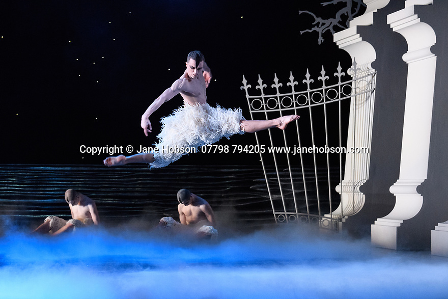 "Matthew Bourne's ""Swan Lake"" returns to Sadler's Wells Theatre, for a run until Sunday 27th January 2019. Choreographed by Matthew Bourne, with lighting design by Paule Constable and costume design by Lez Brotherston. Dancer are: Matthew Ball (The Swan), Liam Mower (The Prince), Nicole Kabera (The Queen), Katrina Lyndon (The Girlfriend), Glenn Graham (The Private Secretary), Megan Cameron (The Hungarian Princess), Freya Field (The German Princess), Zanna Cornelis (The Romanian Princess), Nicole Alphonse, Jonathan Luke Baker, Tom Broderick, Kayla Collymore, Keenan Fletcher, Bryony Harrison, Parsifal James Hurst, Jack Mitchell, Harry Ondak-Wright, Ashley-Jordan Packer, Jack William Parry, Stan West, Carrie Willis. Picture shows: Matthew Ball (The Swan)"