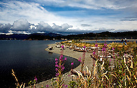 Whiffen Spit encompasses Sooke Harbor west of Victoria, British Columbia.  The spit is a long hike and is entirely public parkland.  Fireweed in foreground.