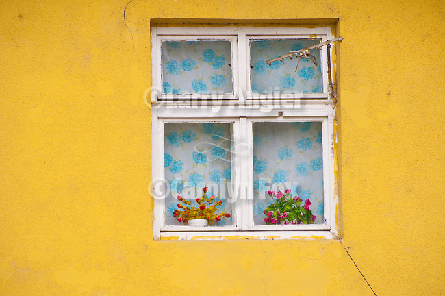 Window with colorful flower and yellow wall, Zenum district, Belgrade, Serbia