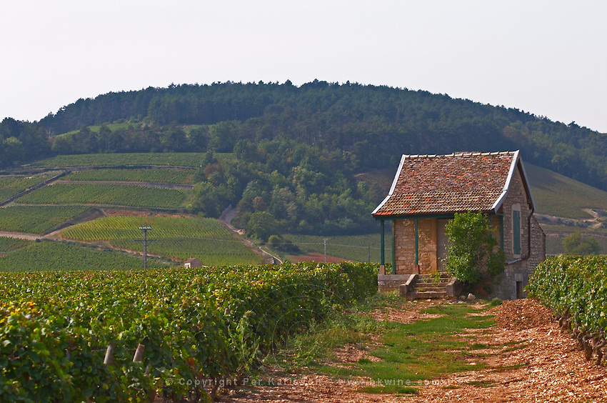 Vineyard. Beaune, Cote d'Or, Burgundy, France