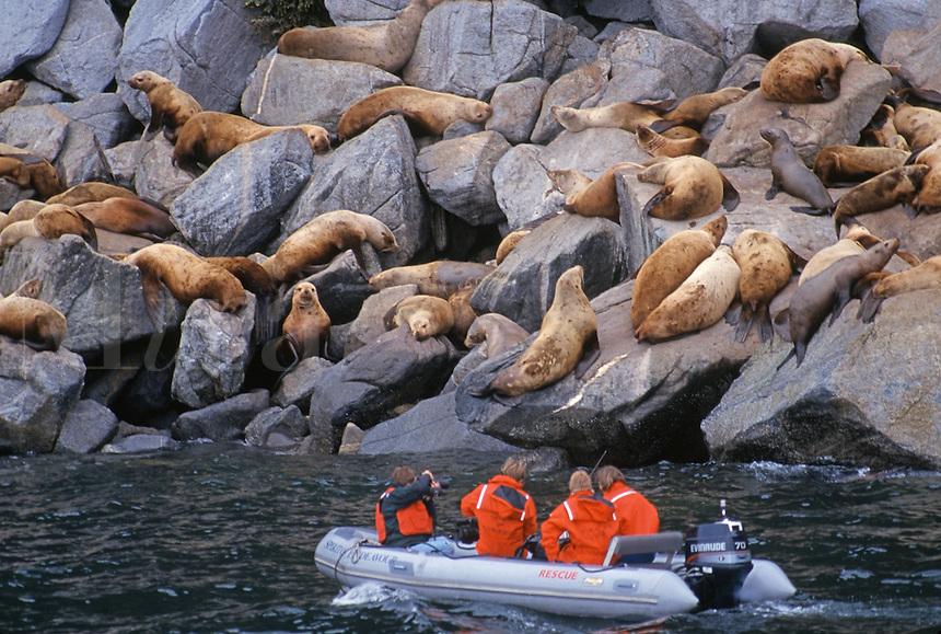 Sightseers observing seals on sunning on rocky coast, Alaska
