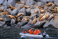 Sightseers observing seals on sunning on rocky coast, Alaska