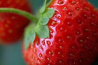 Red strawberries (fragaria ananassa) in garden.