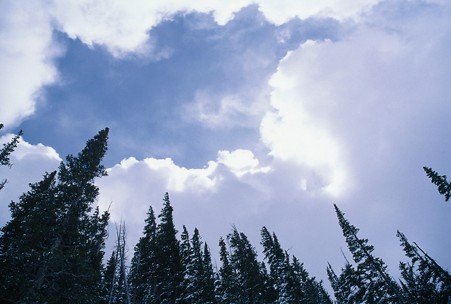 Bright sunlight breaks through heavy cloud cover over subalpine trees, Rocky Mtn Nat'l Park, CO