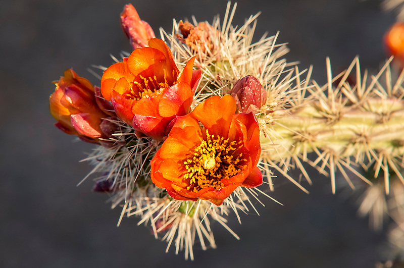 What S Beautiful And Natural But Gets Prickly