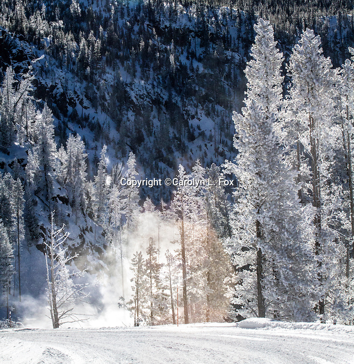 Ice, snow and steam create a winter wonderland in Yellowstone in the winter.