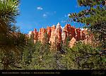 Bryce Canyon Hoodoos, Navajo Trail, Bryce Canyon National Park, Utah