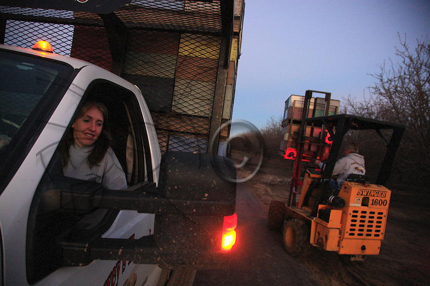 Bob Harvey and his daughter Dee set the hives up in the orchards at nightfall.