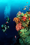 Two divers (MR), one with a Nikonos in hand, make their way along a Fijian reef. Fiji.