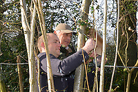 Erecting nest boxes for Hazel Dormouse - Muscardinus avellanarius