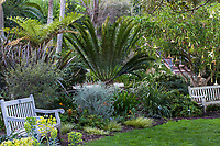 Sitting area with palms at San Diego Botanic Garden