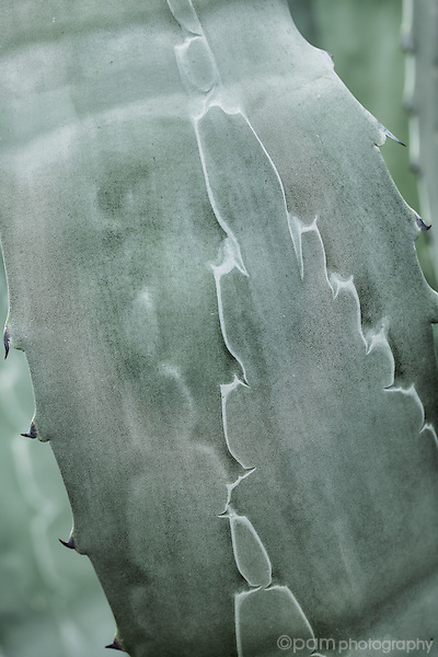 close up of agave desert plant