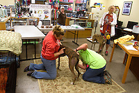 Moira Corrigan (right) and veterinarian Kate Janezak who works at VCA Companion Animals in Lynnwood do a basic vet check of the dogs.