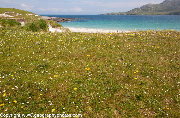 Machair grassland and sandy beach at Bagh a Deas, South Bay, Vatersay island, Barra, Outer Hebrides, Scotland, UK