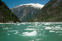 Ice floats in waters colored aqua by glacial silt-Tracy Arm Fjord, Alaska, USA