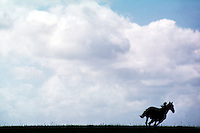 Lone horse galloping on the horizon.