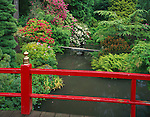 """Kubota Garden, Seattle, WA<br /> Heart Bridge over Mapes creek and the """"Necklace of Ponds"""" with flowering rhododendrons along the margins"""