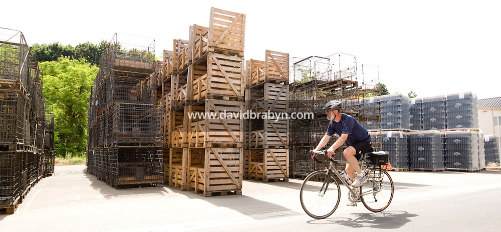 Larry Brodsky, participant in a Backroads cycle tour of the Loire Valley, rides past stacks of empty wine bottle crates in Vouvray, France, 26 June 2008.