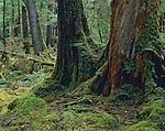 West Coast Rain Forest