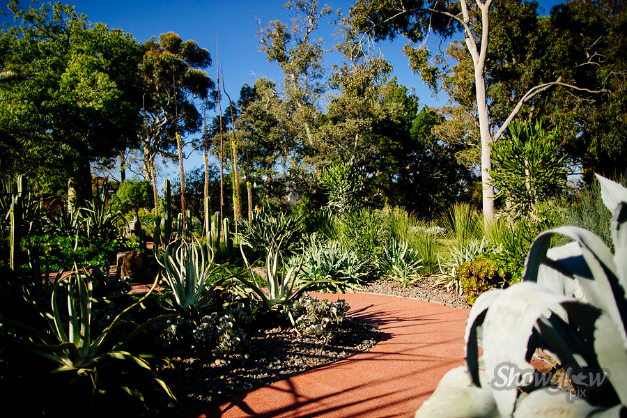 Image Ref: M303<br /> Location: Royal Botanical Gardens, Melbourne<br /> Date: 10.06.17