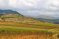 St Chinian. Languedoc. France. Europe. Vineyard with mountains in the background. Mountains in the background.