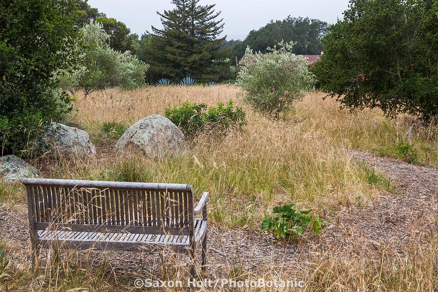 Bench overlooking meadow of California native grass Nassella pulchra, (aka Stipa pulchra), Purple needlegrass - in summer-dry garden, Santa Barbara California