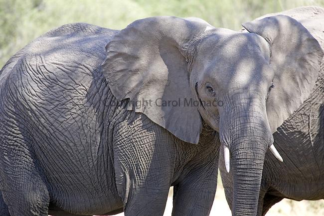 Linyanti Wildlife Reserve, Botswana, September 2006